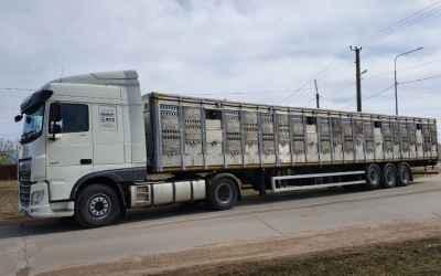 Скотовоз Скотовоз Тонар 9887 - полуприцепы в аренду 8-965-920-08-80 заказать или взять в аренду, цены, предложения компаний