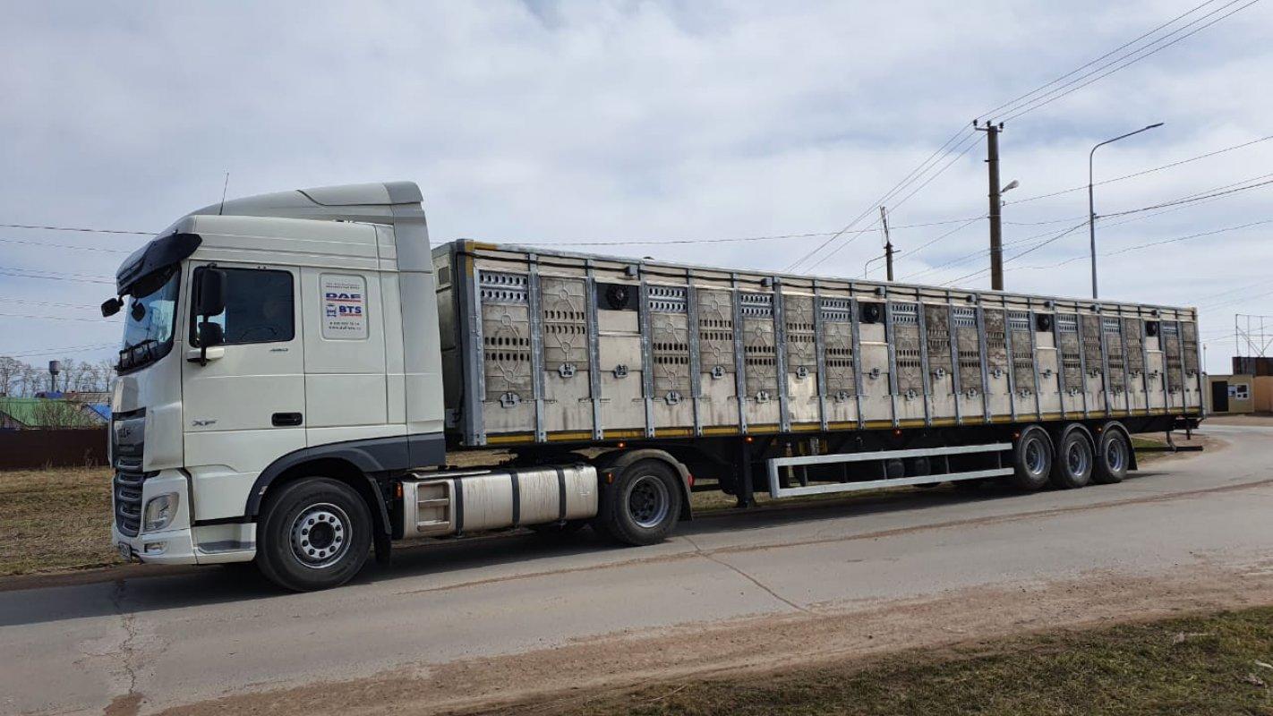 Перевозка животных и скота 8-965-920-08-80 - Южно-Сахалинск, цены, предложения специалистов